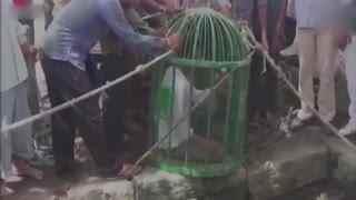 狮子掉20多米深井里 救援人员花两个小时解救