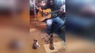 街头沒人听他唱歌猫咪来捧场