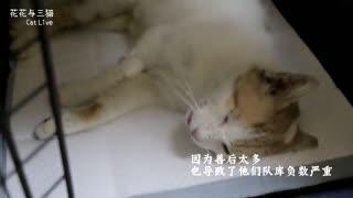 花花与三猫:流浪猫咪被集体绝育,救助人员:这是善后的第一步