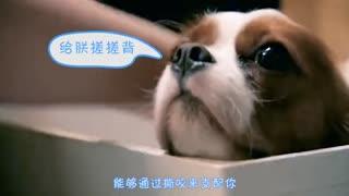 宠有料_20170812_狗狗咬人手的坏习惯