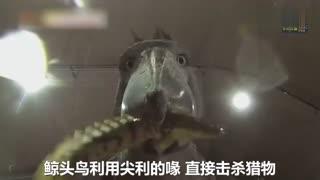 傲娇!韩国动物园巨鸟只吃上千元的高价鱼 动物园面临破产