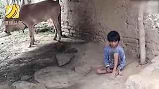 两名印度男孩被家人绑在树上 长达5年之后获救