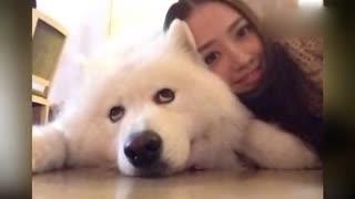 娱乐圈明星宠物大盘点 刘亦菲晒猫孙俪秀萌犬