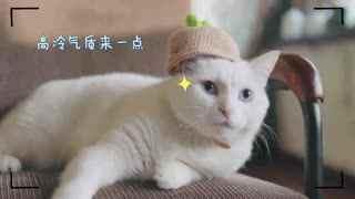 酥饼绿帽子