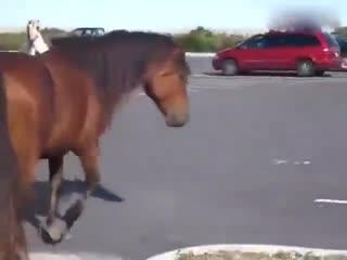 能动手就别吵吵 两匹马在高速公路上干仗