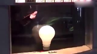 将灯泡扔进电鳗的鱼缸里会发生什么?