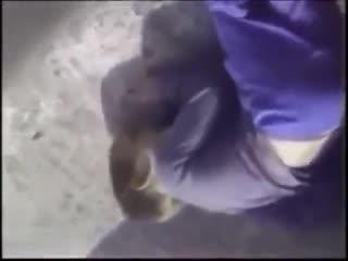 小男孩掉进大猩猩园区,银背大猩猩的举动让人感动