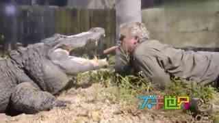 牛人嘴对嘴给鳄鱼喂食,太厉害了