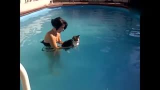【萌宠】一个视频告诉你,猫咪有多讨厌水!