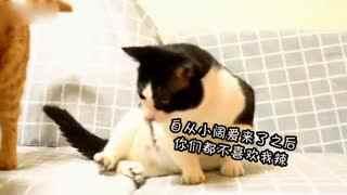【萌宠】#重庆话萌宠配音#之【宝批龙次醋辣】