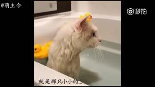 我最喜欢的小鸭叽不见了,有人帮忙找找吗?全部的小鱼干都给你!