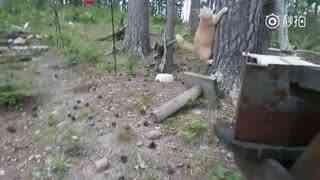 当猫咪遇上熊...真是想不到啊!