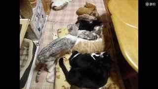 八只猫咪排排睡觉觉,然后来了个小霸王……