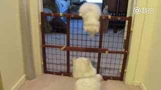 猫妈妈带着宝宝越狱,成功后麻麻的反应融化了,宝宝真棒!