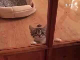 被关在厨房门外的小猫咪,嘤嘤嘤喵要进来!