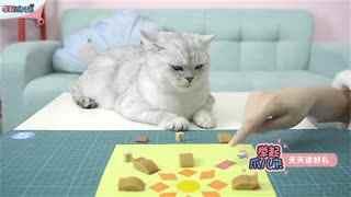 DIY猫咪益智玩具
