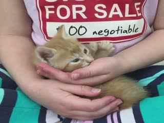 【猫】你们都爱的小奶猫合集II
