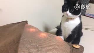 【猫】什什什么东西?!!!