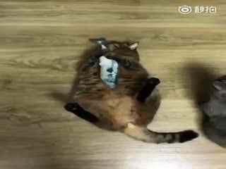 【猫】鱼鱼鱼鱼鱼鱼鱼鱼鱼!