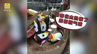 笑疯!史上最强动物园企鹅竟是充气的