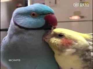 一心想求关注的鹦鹉~
