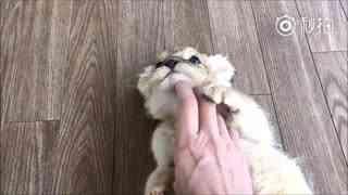 混蛋不要把我当猫撸啊喂!