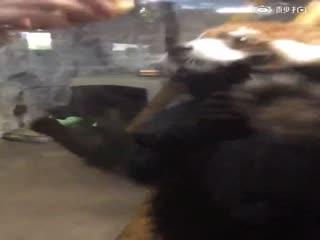 【小熊猫】再来一个~