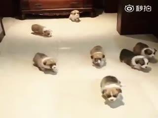 【狗狗】散步啦