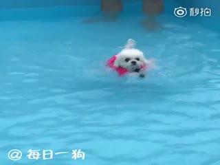 【狗狗】一开始还以为是假动作,入水以后我都惊呆了!