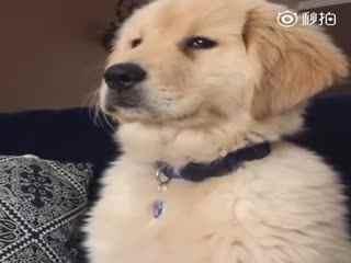 【狗狗】我一本正经板起脸来发脾气的时候连我自己都怕!