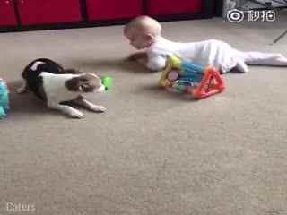 【狗狗】看来不止父母是宝宝的人生导师,狗狗也是!有狗子在边上陪宝宝学爬,爸爸妈妈可轻松不少!
