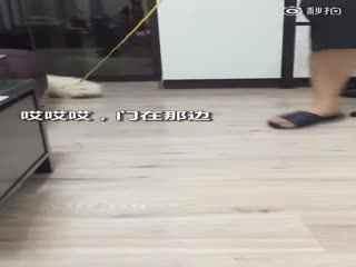【狗狗】一只非常想出门遛弯的小博美,用尽全身力气表达了自己的渴望!