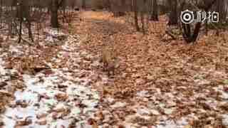 小狐狸要跟我回家吗~~~