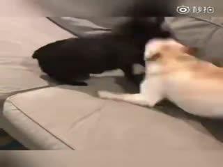 【狗狗】对付贱兮兮的弟弟最好的方法大概只有揍一顿一条路了吧,不然对方只会把你烦到崩溃