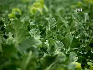 领航_20171214_曾志宏:草根儿的齐妙农场