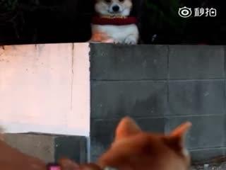 【狗狗】就想叫两声,谁知道背后有狗