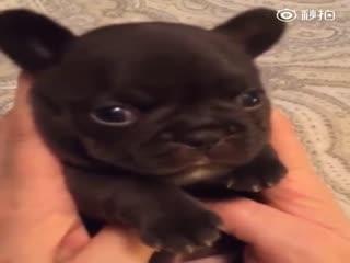 【狗狗】你的暖手宝正在上线中!