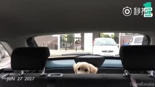 【狗狗】一秒代表一天,记录了Putney来家里五个月的每一点成长!