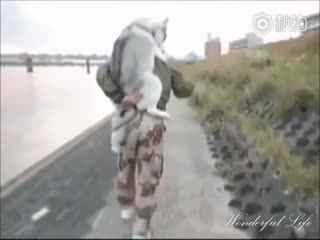 【二哈】二哈求主人背就算了,见别人家的狗自己走路还要嘲笑一下…