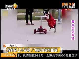 狗狗穿上小花裙 广场玩滑板引围观