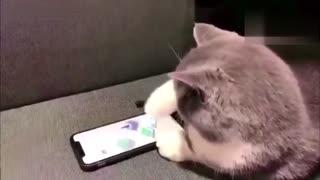 猫玩跳一跳都比你厉害系列