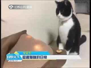 逗趣猫咪的日常