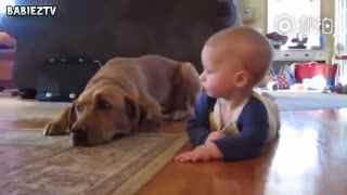 【狗狗】为了早日培养出合格的小小捡屎官,汪星人也是使出了浑身解数
