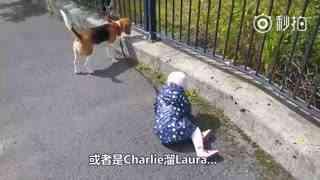 【狗狗】来自英国爱尔兰的小女孩Laura和她的两个朋友