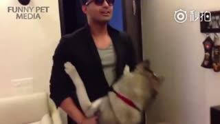 【狗狗】当狗子见到许久不见的主人