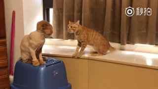 【猫】小伙伴被剃了毛以后