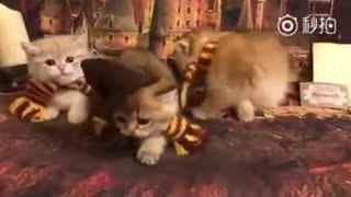 【猫】瞧瞧今年霍格沃茨新来的三个学生