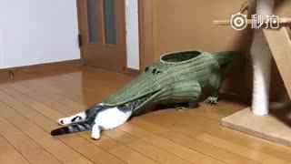 【猫】可爱的小猫居然自己爬进鳄鱼嘴里