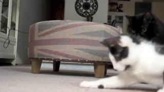 【猫】家里来了新成员,如何处理头胎和二胎关系