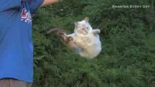 【猫】听说猫从半空摔落永远脚着地,于是这哥们试验了几次